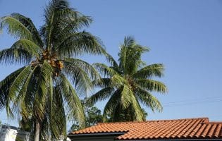 Tile Roofs, Tile Roofs